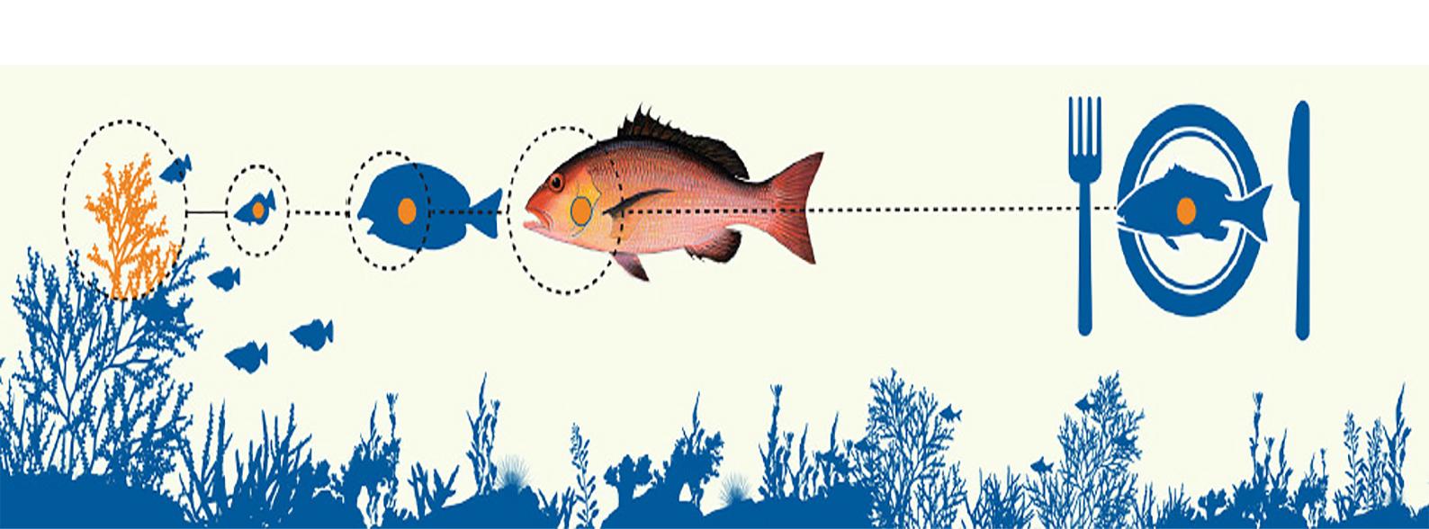 雪卡毒魚免疫分析測試