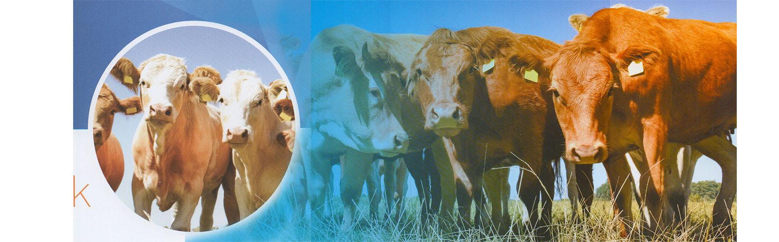 牛+牲畜疾病快篩
