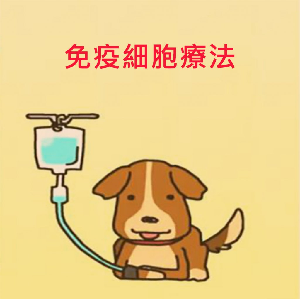 動物。免疫細胞療法