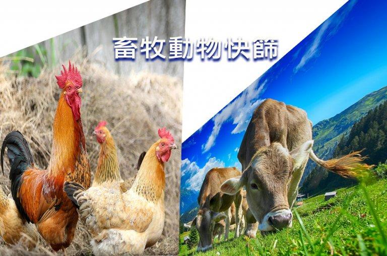 畜牧動物快篩